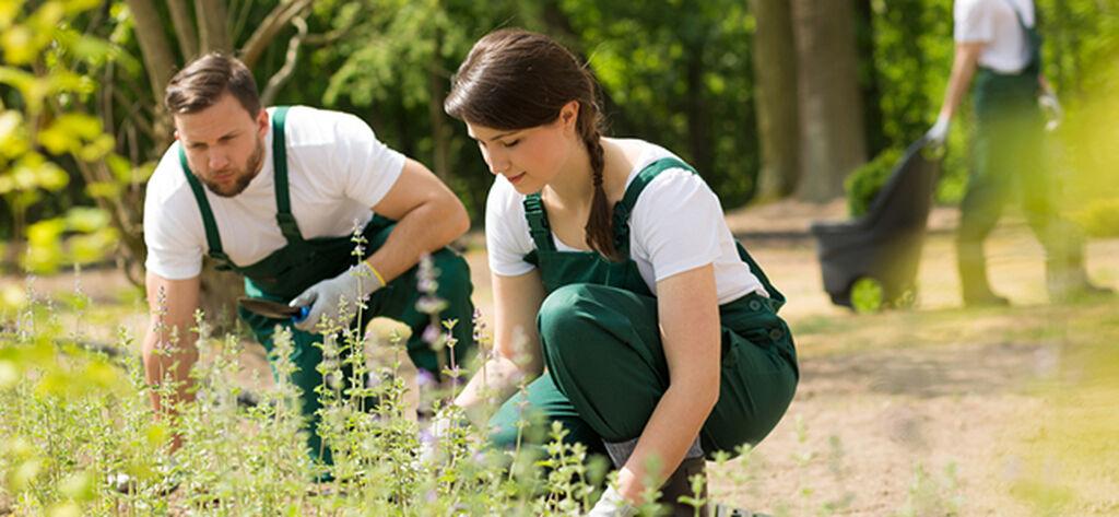 Trädgårdshjälpen