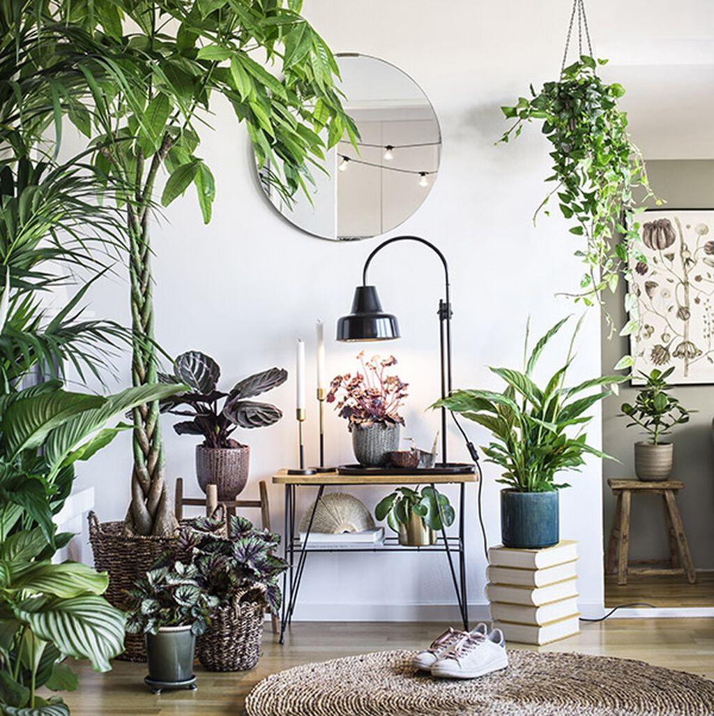 Växt- och odlingstrender