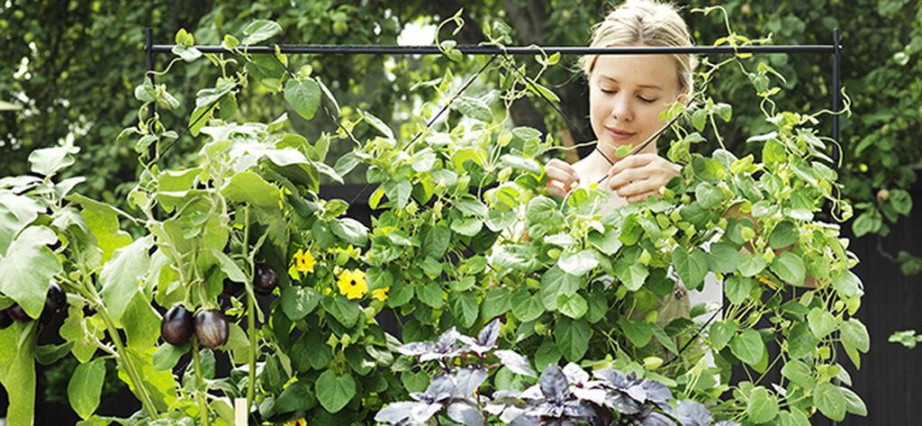 Starta en egen ekologisk odling