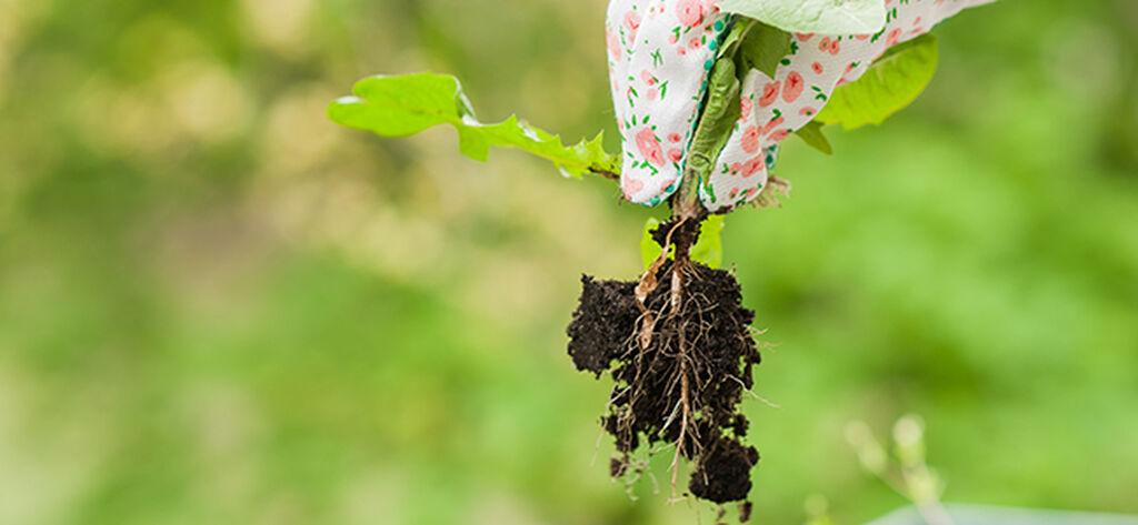 Så rensar du bort det vanligaste ogräset