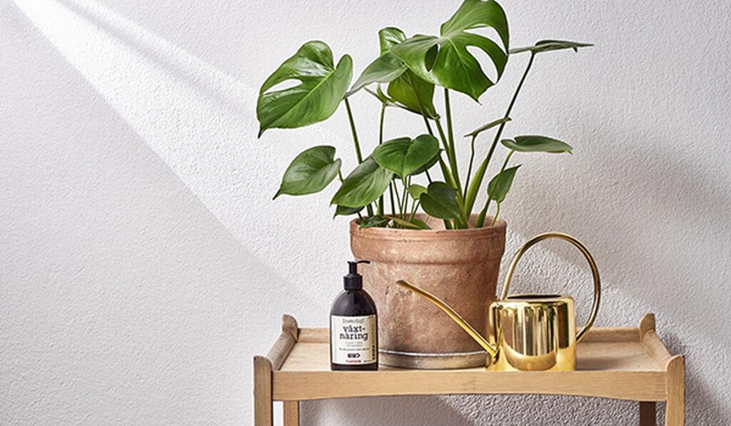 Vattna dina krukväxter inomhus