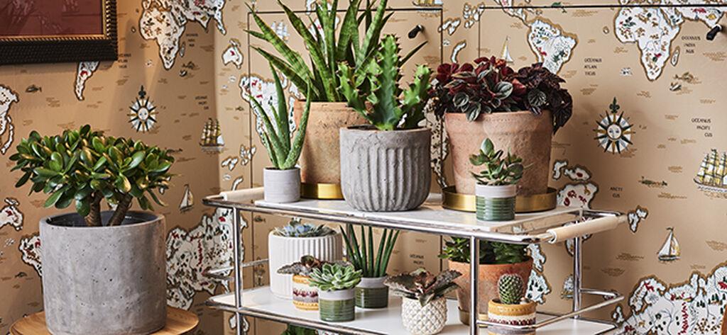 Lista med torktåliga växter