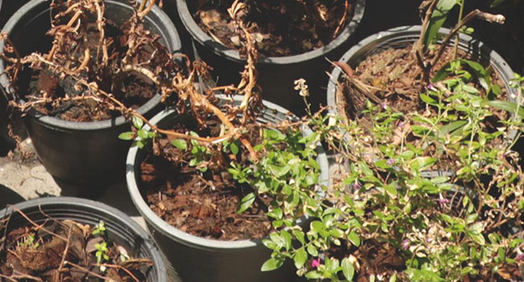 Guide: fynda och plantera växter sent på hösten
