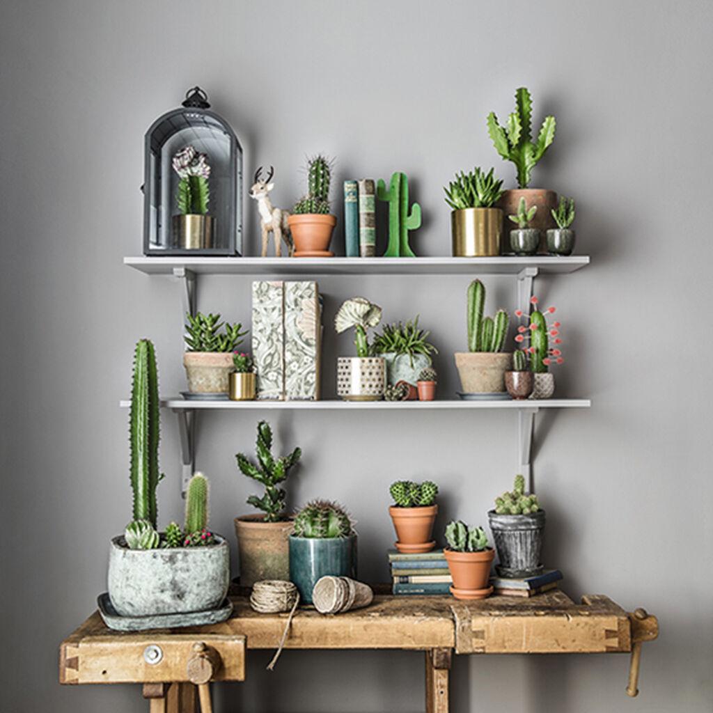 Kaktus - lättskött och trendig