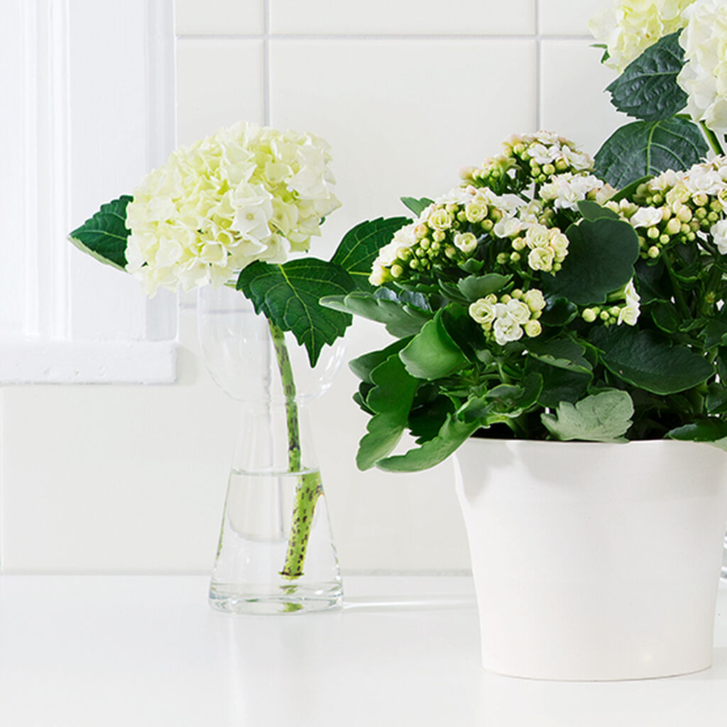 Växter i badrummet piggar upp