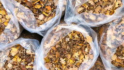 Gör din egen jord och mull av höstens löv och gräsklipp