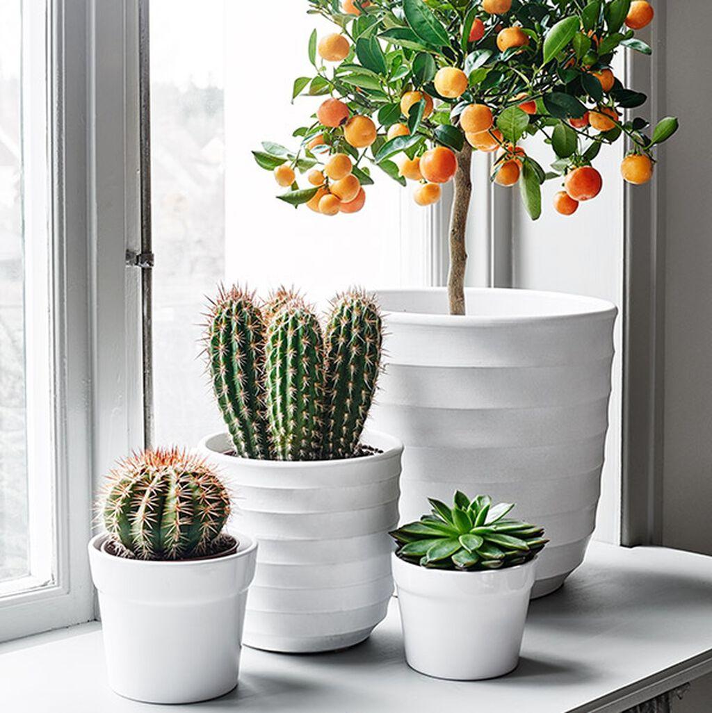 Härliga växter för alla fönster