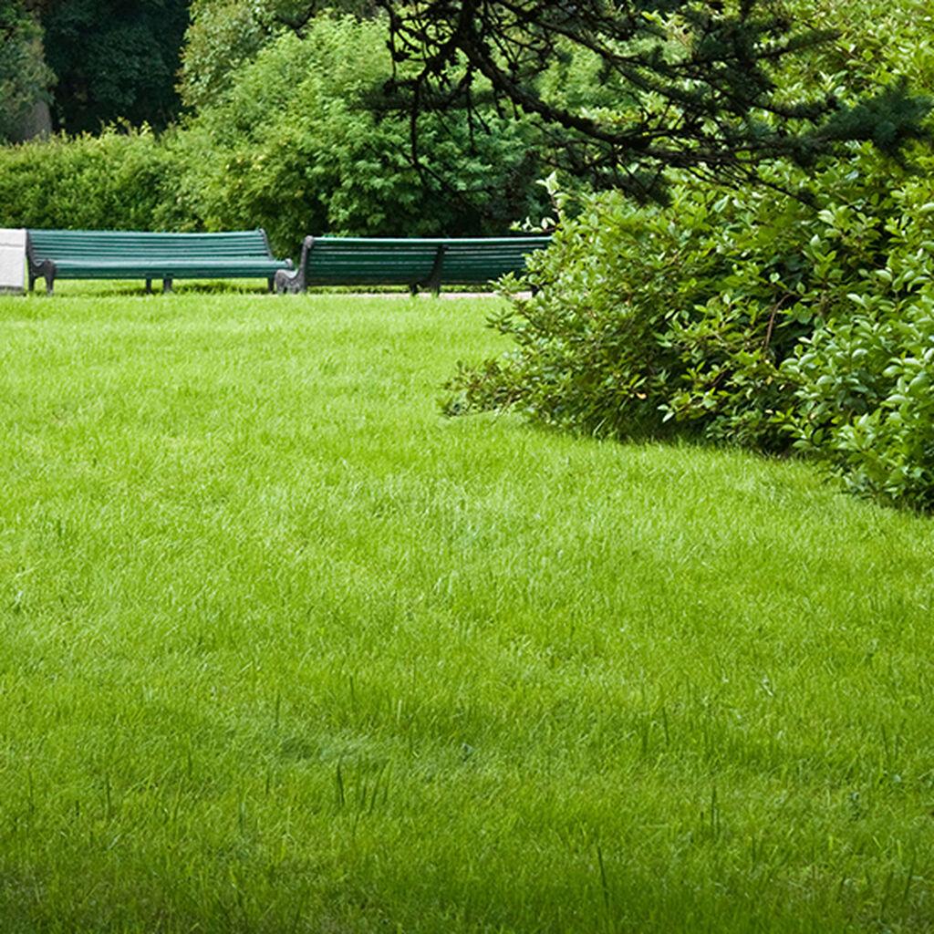 Gräsmatta – gödsel, skötsel och mossa