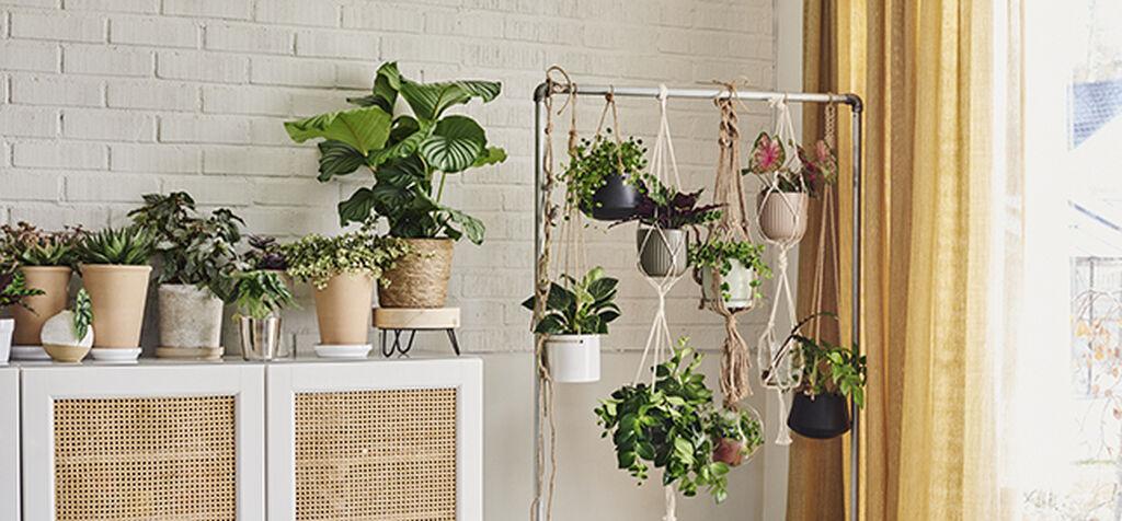 Möblera grönt med växter högt och lågt