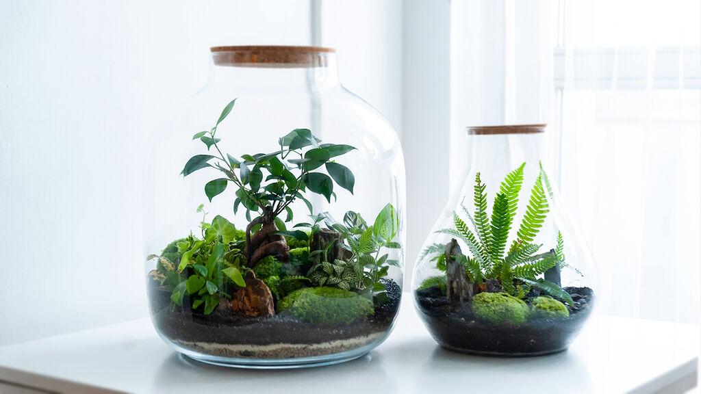 Terrarieodling eller landscaping