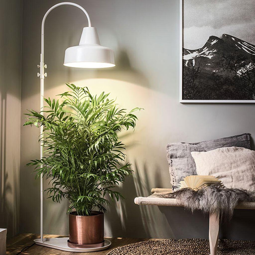 Ljusguide för växter inomhus