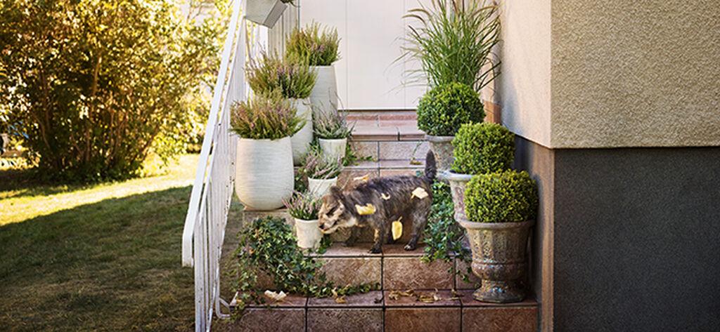 Gör höstfint på balkong, altan och vid entré