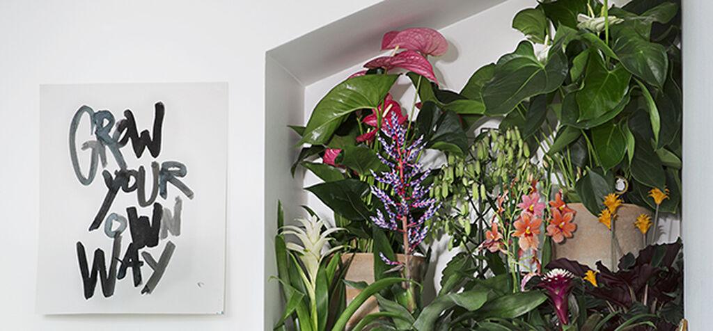 Blommande krukväxter – Inred efter säsong