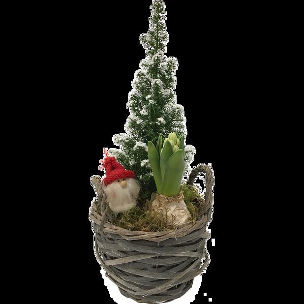 Växtgrupp Harry, Flerfärgad