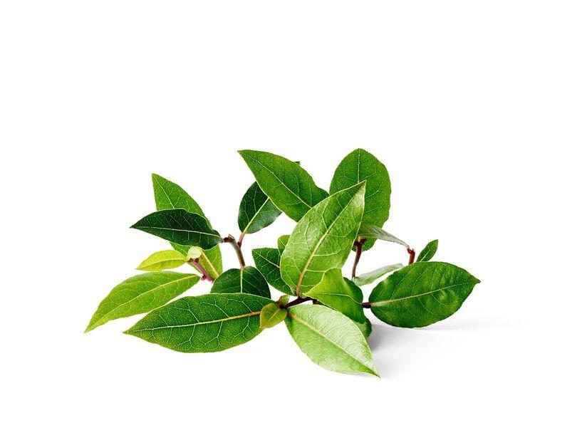 Lager, Ø10.5 cm, Grön