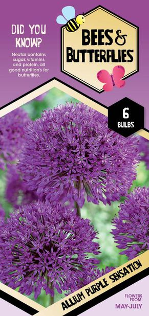 Purpurlök 'Purple Sensation', Vit