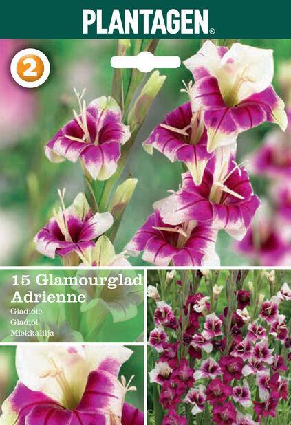 Gladiol 'Adrienne', Rosa
