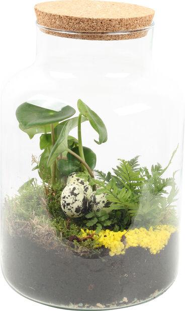 Växtterrarium Aisha, Höjd 30 cm, Grön