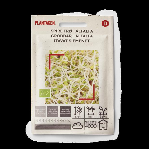 Groddar Alfalfa