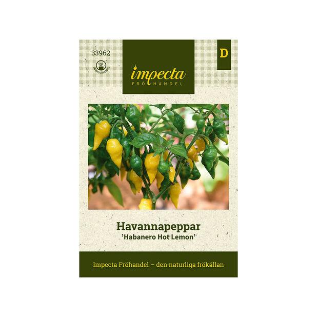 Havannapeppar 'Habanero Hot Lemon', Gul