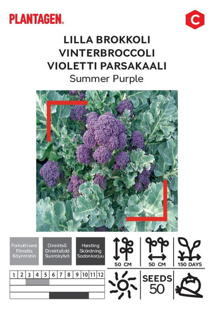 Vinterbroccoli 'Summer Purple'