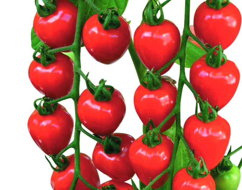 Jordgubbstomat 'Garden Berry', Ø10.5 cm, Röd