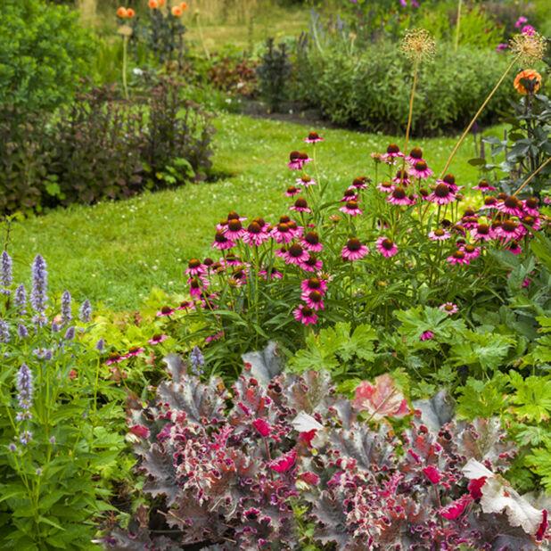 Samplantering perenner, Höjd 70 cm, Flerfärgad