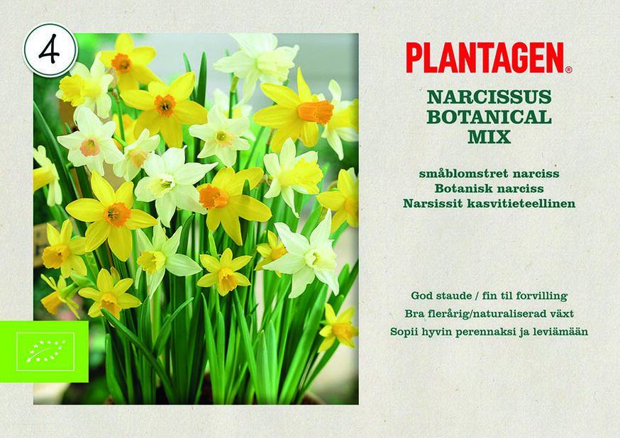 Narciss mix, Gul