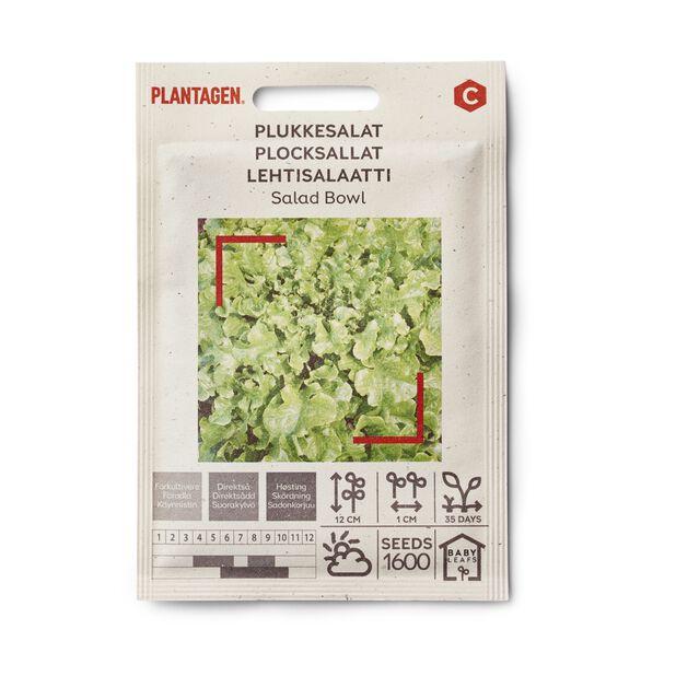 Plocksallat 'Salad Bowl'