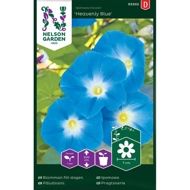 Blomman för dagen 'Heavenly Blue', Flerfärgad