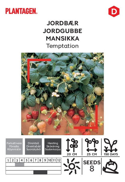 Jordgubbe 'Temptation'