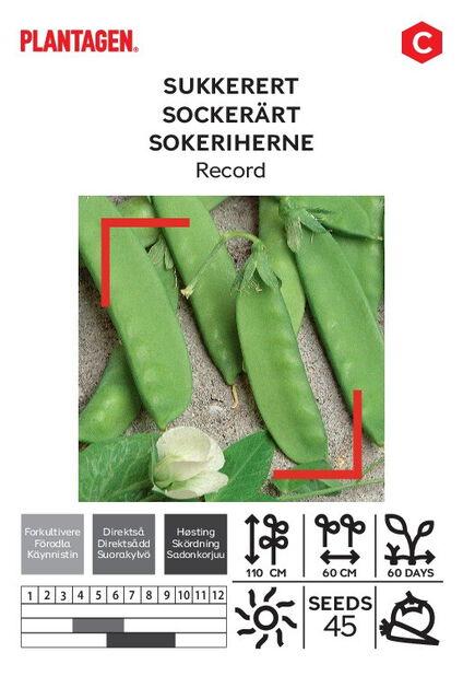 Sockerärt 'Record'