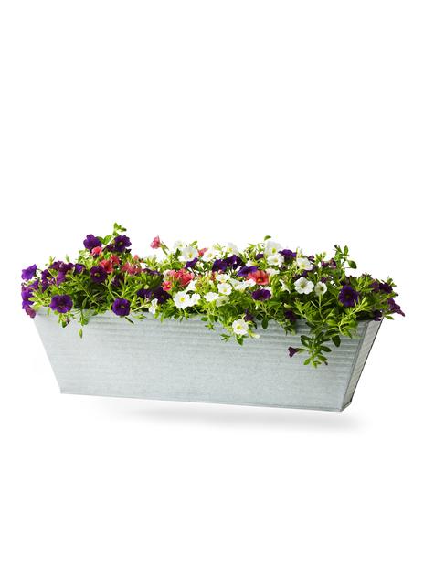 Petunia, Ø55 cm, Flerfärgad