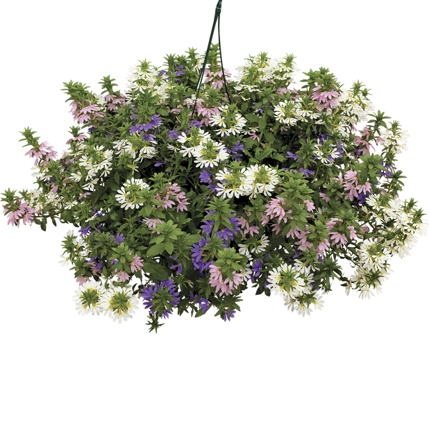Femtunga, Ø25 cm, Flerfärgad