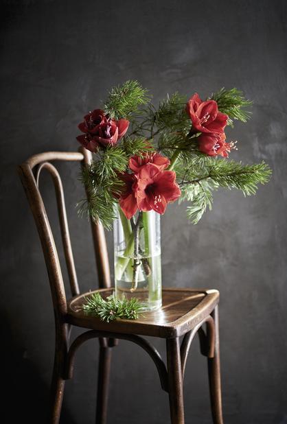 Amaryllis 1-stänglad, Höjd 40 cm, Röd