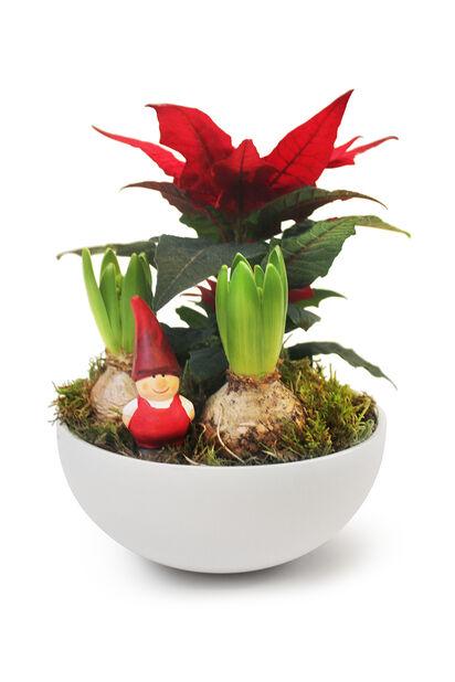 Växtgrupp Bill, Flerfärgad