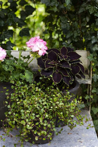 Palettblad, Ø12 cm, Flera färger