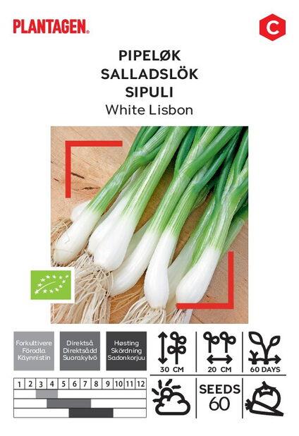 Salladslök 'White Lisbon'