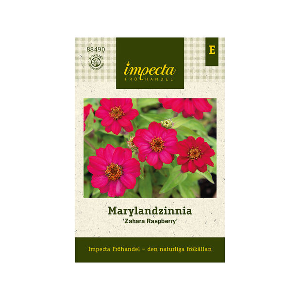 Marylandzinnia 'Zahara Raspberry', Rosa