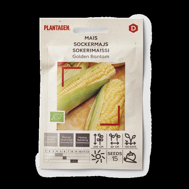 Sockermajs 'Golden Bantam'