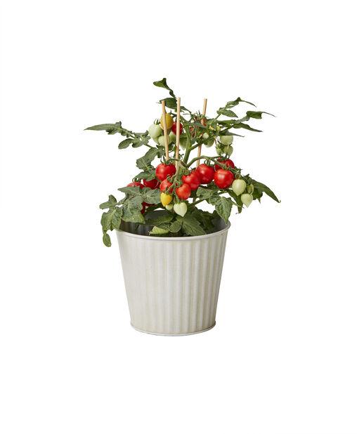 Körsbärstomater, Ø10.5 cm, Röd