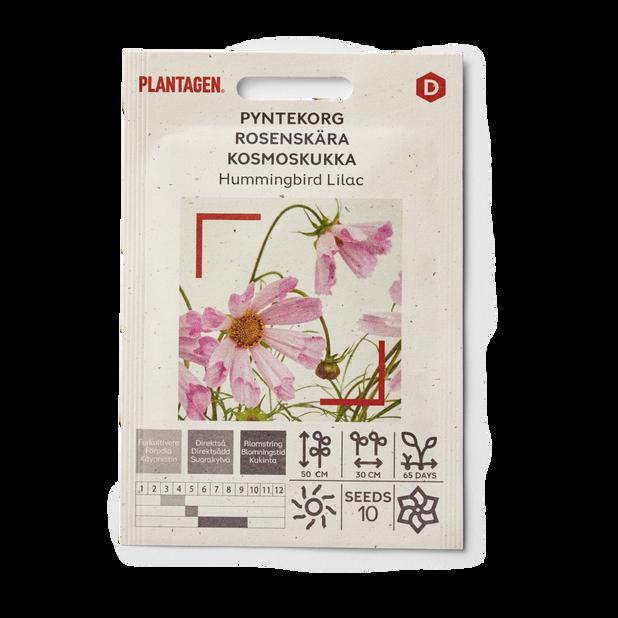 Rosenskära 'Hummingbird Lilac'