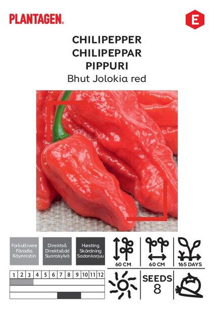 Chilipeppar 'Bhut Jolokia Red'