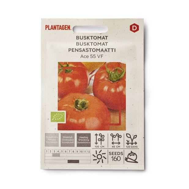 Tomat 'Ace 55 VF'