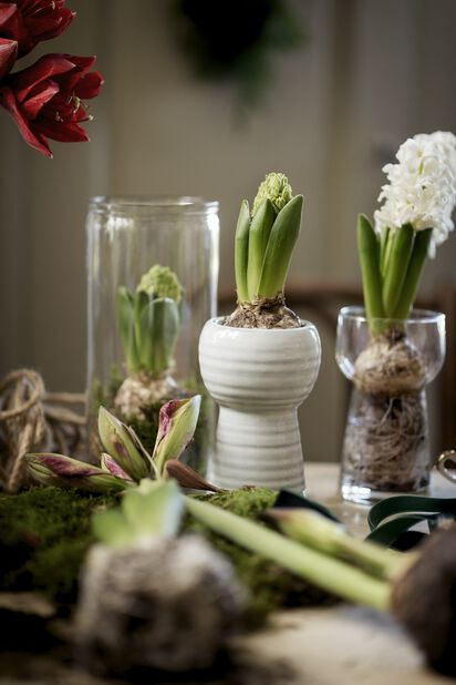Hyacintvas Julia, Höjd 14 cm, Vit