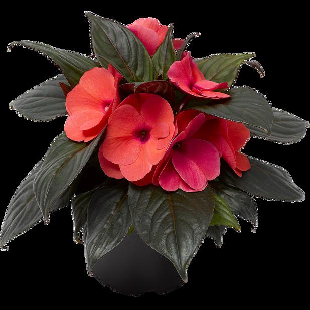 Lyckliga Lotta, Ø12 cm, Röd