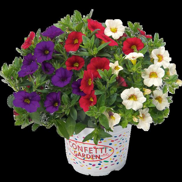 Petunia, Ø12 cm, Lila