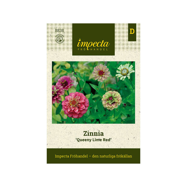 Zinnia 'Queeny Lime Red', Rosa