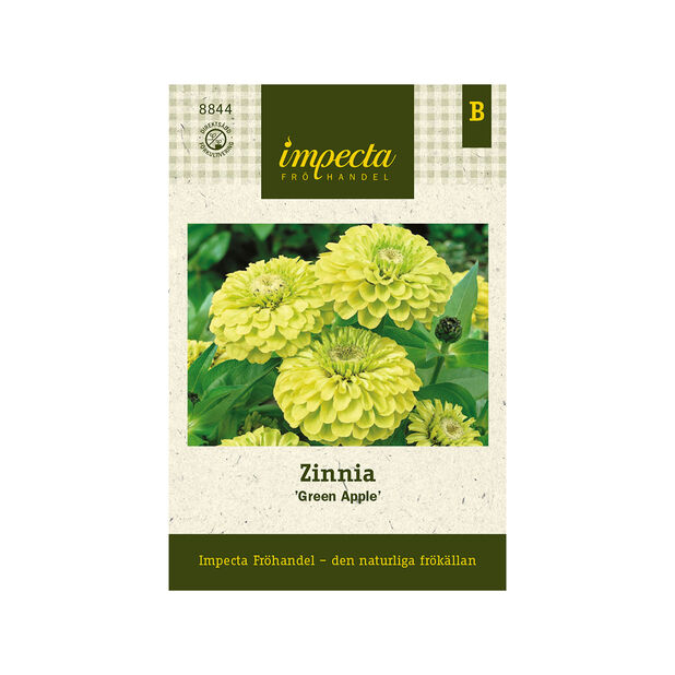 Zinnia 'Green Apple', Grön