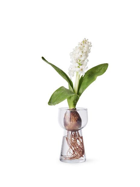 Hyacintvas H14 cm
